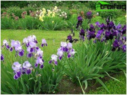 the variety of irises