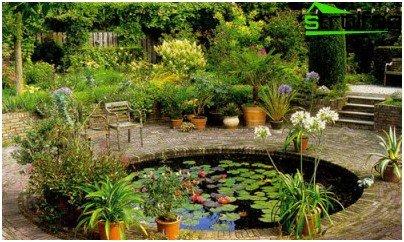 pond contemplation