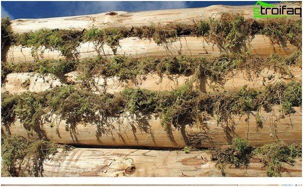 Moss - insulation gaps
