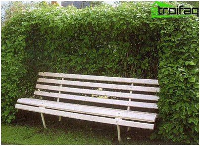 Bench with Fencing