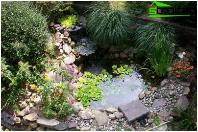 for Small pond care