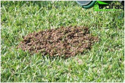 earthen wasps