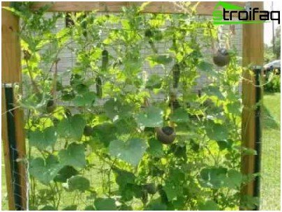trellis for vegetables