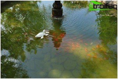 Como preparar um lago artificial para cria o de peixes nele for Como criar truchas en estanques