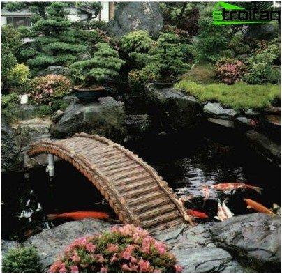 C mo se prepara un estanque artificial para la cr a de for Cria de peces en casa