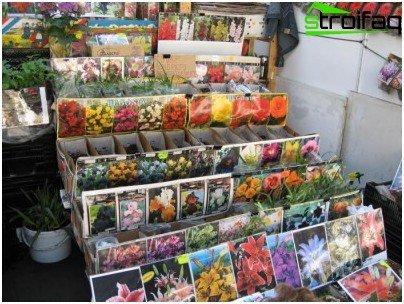 floral species
