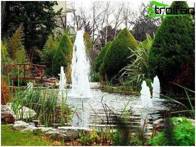 in a garden pond