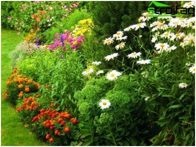 Perennials in the flowerbed