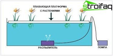 vegetables hydroponically