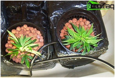 equipment for hydroponics