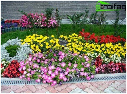 flowerbed in autumn