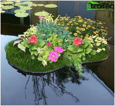 flowerbed in the pond