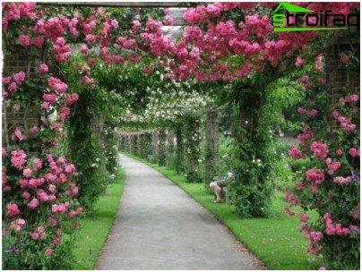 حديقة الورود