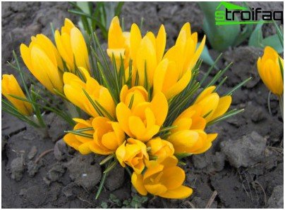 flores en el jardin
