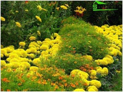 flores de menor tamaño