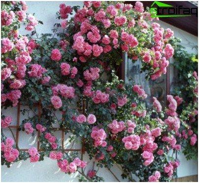 рози близо до къщата