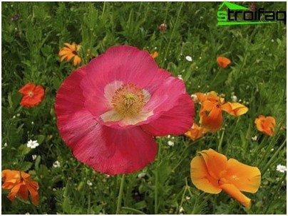 biljke za travnjak