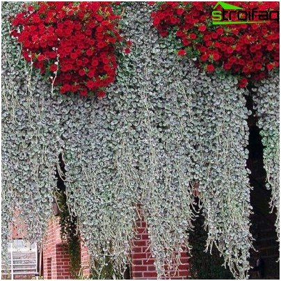 ampelöse Pflanzen