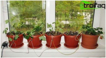 plante belysning