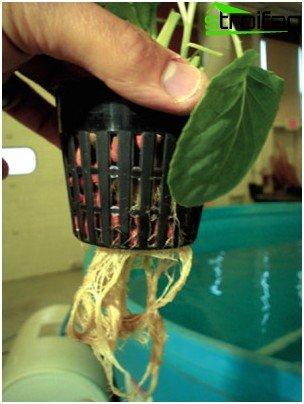 hydroponisk dyrkning