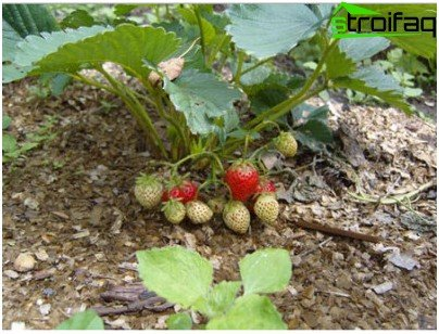 agricultural technique
