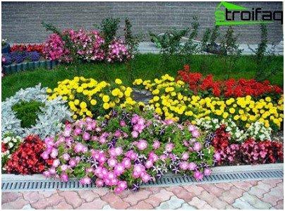 flowerbed in autumn