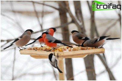 za ptice