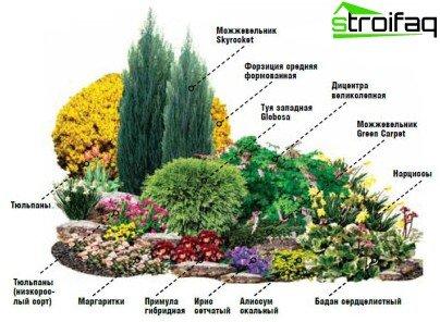نباتات في حوض الزهور