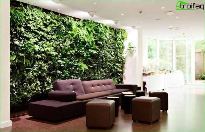Plantas de interior en el interior 5